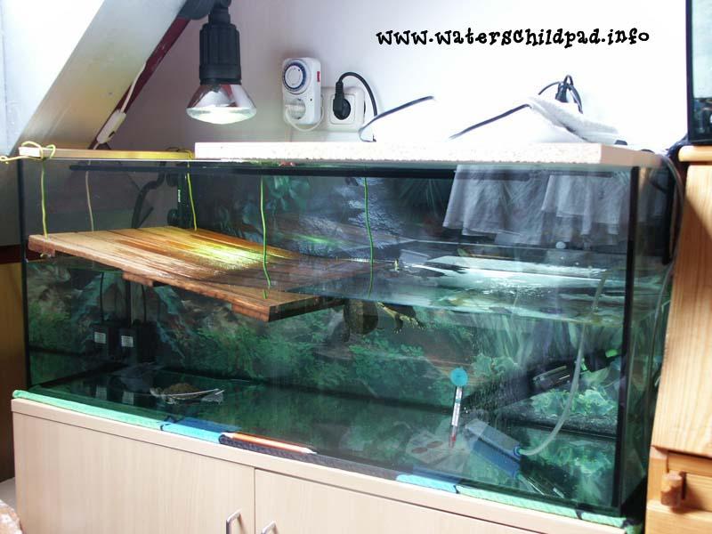 waterschildpadinfo op deze site vind u alles over de waterschildpad